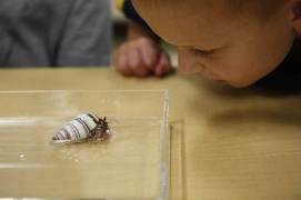 Observing a hermit crab